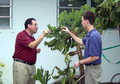 Dr. Javier Francisco-Ortega and Dr. Carl Lewis examine an Opuntia