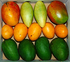 mangos by the lug