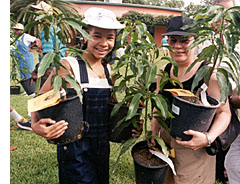 Mango Tree Sales